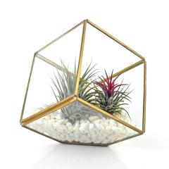 Geometric Glass-FH102GD